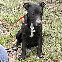Adopt A Pet :: Dolly - Baton Rouge, LA