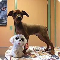 Adopt A Pet :: Ralphie - Wilmington, DE