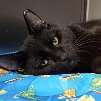 Adopt A Pet :: Dawson - Lago Vista, TX