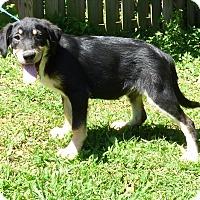 Adopt A Pet :: Pablo - Hartford, CT