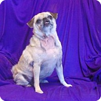 Adopt A Pet :: Kate - Austin, TX