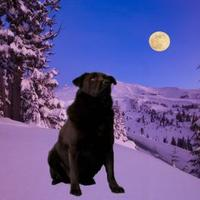 Retriever (Unknown Type) Mix Dog for adoption in Valley Falls, Kansas - Klaus