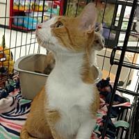 Adopt A Pet :: Molly - Land O Lakes, FL