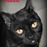 Adopt A Pet :: Shadow - Bensalem, PA