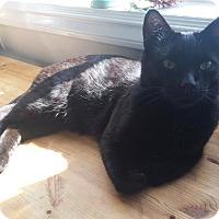 Adopt A Pet :: Donatello - Vancouver, BC