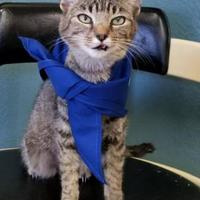 Adopt A Pet :: Kissy - Sullivan, IN