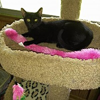 Adopt A Pet :: Wiley - Fort Lauderdale, FL