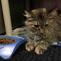 Adopt A Pet :: LILY - Ames, IA