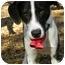 Photo 1 - Hound (Unknown Type) Mix Dog for adoption in Hamburg, Pennsylvania - BANJO