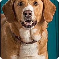 Adopt A Pet :: Elf - Owensboro, KY
