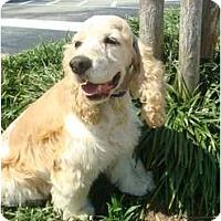 Adopt A Pet :: Barney - Sugarland, TX