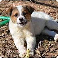 Adopt A Pet :: Brister - New Boston, NH