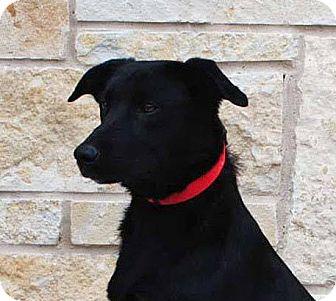 Labrador Retriever Mix Dog for adoption in Weatherford, Texas - Maisey