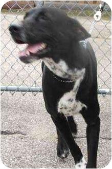 Labrador Retriever Mix Dog for adoption in West Warwick, Rhode Island - Dempsey (URGENT)