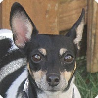 Adopt A Pet :: Bitsy - North Olmsted, OH