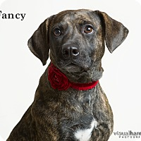 Adopt A Pet :: Fancy - Phoenix, AZ