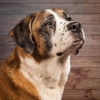 Adopt A Pet :: Emily - Glendale, AZ