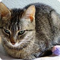 Adopt A Pet :: Reba - Belleville, MI