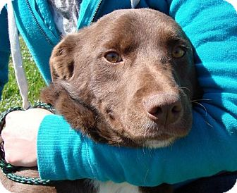 Border Collie Mix Dog for adoption in Erwin, Tennessee - Perry
