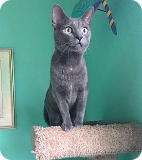 Domestic Shorthair Cat for adoption in Huntsville, Alabama - Moe