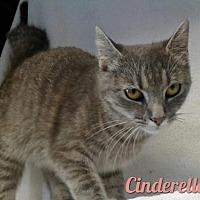 Adopt A Pet :: Cinderella - Harrisville, WV