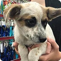 Adopt A Pet :: Luke - Fresno, CA