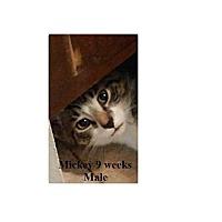 Adopt A Pet :: MICKEY - Northfield, OH
