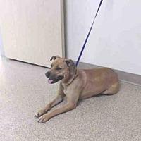 Adopt A Pet :: GRACIE - Palmer, AK