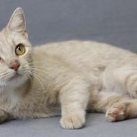 Adopt A Pet :: Barb - Blackwood, NJ