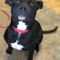 Adopt A Pet :: Diva - Brownwood, TX