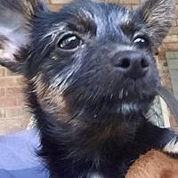 Adopt A Pet :: Ginger K92-9785 - Thibodaux, LA