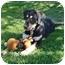 Photo 3 - Labrador Retriever Mix Puppy for adoption in San Clemente, California - ZACK