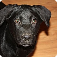 Adopt A Pet :: Kobe - in Maine, PENDING - kennebunkport, ME