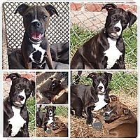 Adopt A Pet :: Keena - Donaldsonville, LA
