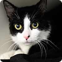 Adopt A Pet :: Sweetie Poo - Chicago, IL