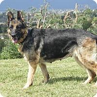 Adopt A Pet :: Fern - Laguna Niguel, CA