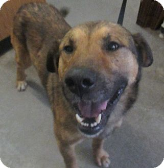 German Shepherd Dog Mix Dog for adoption in Lloydminster, Alberta - Hoffman