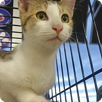 Adopt A Pet :: Link - Philadelphia, PA
