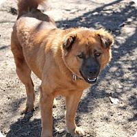 Adopt A Pet :: SUKI - Carrollton, TX