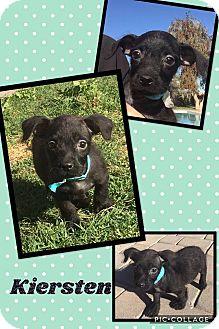 Terrier (Unknown Type, Small) Mix Puppy for adoption in Scottsdale, Arizona - Kiersten