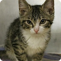 Adopt A Pet :: Stars - Hilton Head, SC