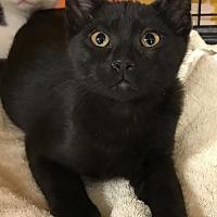 Adopt A Pet :: Stanley - Furlong, PA