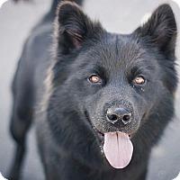 Adopt A Pet :: Katy - Berkeley, CA