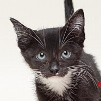 Adopt A Pet :: TUESDAY - Pt. Richmond, CA