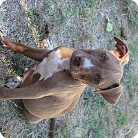 Adopt A Pet :: Mercury - Lodi, CA