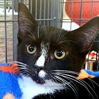 Adopt A Pet :: Judy King - Sarasota, FL