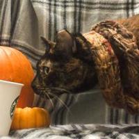 Adopt A Pet :: Janna - Sacramento, CA