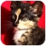 Photo 4 - Domestic Shorthair Kitten for adoption in Aldie, Virginia - Morrigan