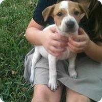 Adopt A Pet :: Hermoine - Justin, TX