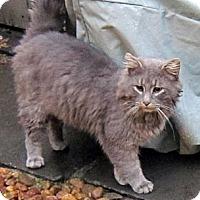 Adopt A Pet :: TicToc - Brooklyn, NY